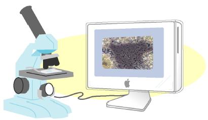 顕微鏡でお口の中の菌をチェック